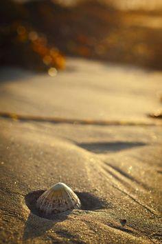 Bokeh Black and White Photography Sunset Beach, Ocean Beach, Nude Beach, Shell Beach, Waves, Am Meer, Jolie Photo, Bokeh, Ciel