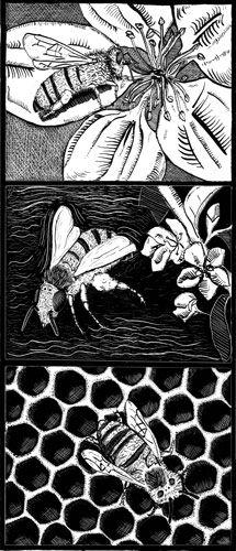 Honeybee scratchboard