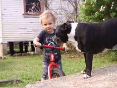 Dog Saves 2-Year-Old's Life After Finding Child Floating Face Down in Dam