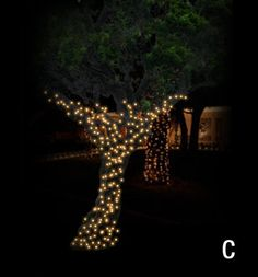 Christmas Décor of Ottawa   Lighting Sample for a Trunk and Main Branch Wrap