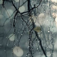 Explore amazing art and photography and share your own visual inspiration! Emotional Photography, Nature Photography, Pinterest Photography, I Love Rain, Magical Tree, Rain Art, Colorful Roses, Tree Leaves, Photo Tree