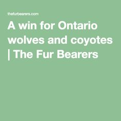 A win for Ontario wolves and coyotes | The Fur Bearers