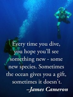 Every time you dive, you hope you'll see something new - some new species. Sometimes the ocean gives you a gift, sometimes it doesn't. Scuba Diving Quotes, Skin Diver, Diver Down, Ocean Quotes, Scuba Gear, Cave Diving, Sea Diving, Marine Biology, Koh Tao
