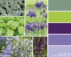 stachys, melissa, iris, linum, salvia