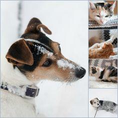 Herzenswärme Corgi, Winter, Animals, Inspiration, Heart, Winter Time, Biblical Inspiration, Corgis, Animales