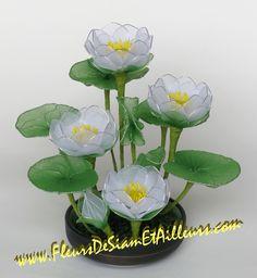 PHOTO ONLY ~ Lotus blancs