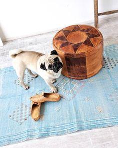 6890 best pug alicioius images in 2019 pug dogs pug pugs rh pinterest com