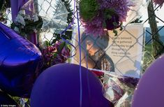 The lawn and gate at Paisley Park was strewn in purple balloons and flowers left by devastated fans, who honored the legend with Prince's signature color Prince Paisley Park, Purple Balloons, Prince Purple Rain, Dearly Beloved, We The Best, Roger Nelson, Prince Rogers Nelson, Purple Reign, The Heirs