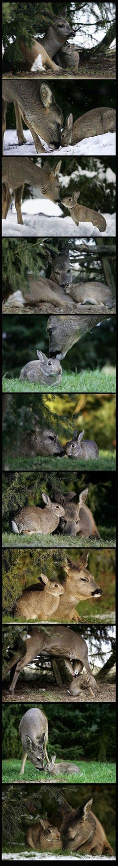 Love when 2 totally different species come together and find comfort in each other.  We could learn a lot from animals.