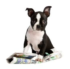 Puppy Training Tips From 5 Celebrity Pet Training Experts