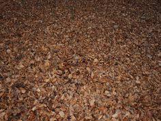 Blätter o3o