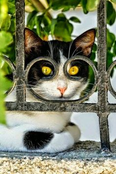 Hello......... - Maria G Pohl - Google+