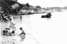 Elefantes del Circo Atlas bañándose en la Playa de los Peligros (1960).