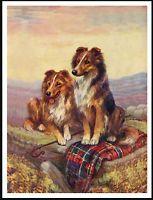 SHETLAND SHEEPDOG SHELTIE DOGS ON A TARTAN RUG CHARMING DOG PRINT POSTER
