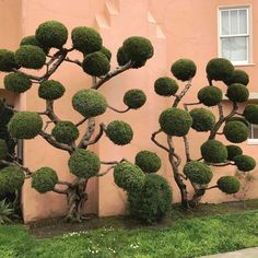 Seuss-Like Topiaries of San Francisco Photographed by Kelsey McClellan The Dr. Seuss-Like Topiaries of San Francisco Photographed by Kelsey McClellan Topiary Garden, Topiary Trees, Garden Trees, Garden Paths, Garden Art, Home And Garden, Thuja, Unique Trees, Garden Landscape Design