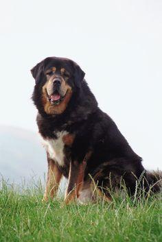 Lievito di birra, germe di grano e rosa canina sono gli integratori giusti per proteggere le articolazioni di cani, gatti e uccellini.