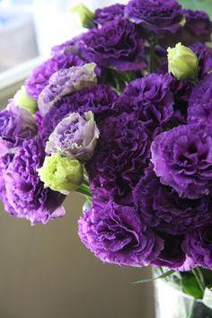 purple and light green eustomas   #purple