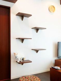 キャットウォークにつながるネコ階段