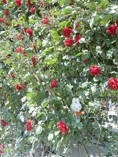 Nijntje vertelt aan Marika dat ze zich echt een prinses voelt in de rozentuin van Sissi. En wat ruiken die rozen lekker!