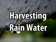 It might be impossible to store all the water you need. That's why you should learn a little bit about harvesting rain water.
