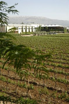 Lebanon has one of the longest-stretching wine-making histories in the world, and some of its most interesting bottles.