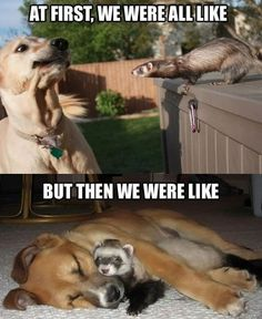 30 Funny Cats And Dogs That Will Make You HOWL #funnyanimals #funnycats #funnydogs #animals #animalpics