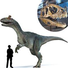 El Cryolophosaurus es un dinosaurio carnívoro del Jurásico extraño por su curiosa cresta que lo identifica y que aun los paleontólogos no se ponen de acuerdo a cerca de la funcionalidad de la misma. Medía 3 metros de alto. Era un dinosaurio agil. El cráneo media 65 centímetros. Poseía unas poderosas garras en sus patas delanteras. Longitud: 6 metros Encontrado en la Antártida