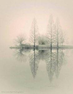 Nicolas Bell Photography