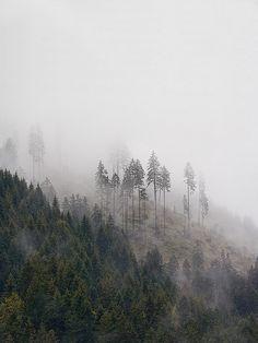 Fog by Vitality