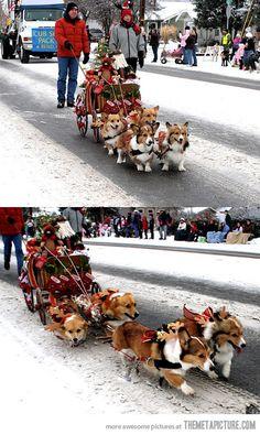 A sleigh pulled by corgis