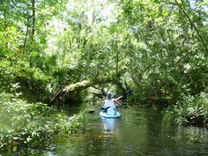Kayaking on the Cotee River East of James Grey Park, New Port Richey Florida