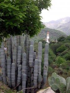 Teotitlan de Flóres Magón, región La Cañada de Oaxaca.