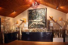 Icelandic Phallological Museum (now in Reykjavik)