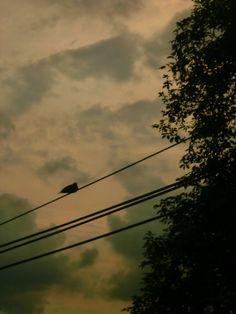 Tumblr Utility Pole, Tumblr, Celestial, Sunset, Photography, Outdoor, Outdoors, Photograph, Fotografie