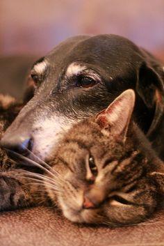 Joep & Flo #animallove #cat #dog #teckel #dachshund