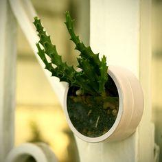 Os MiniMundos: terrários e minijardins que levam verde em miniatura às grandes…