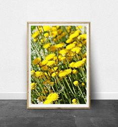 Do you like this Chamomile Print? I love it. You can fined this print here: https://www.etsy.com/listing/573370694/photography-print-floral-print-photo?ref=shop_home_active_1