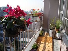 balcony garden  wow this is lovely :)