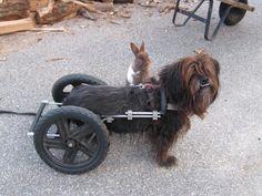 Dog with bunny friend