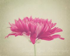 pink wall art tan flower photography / IN STOCK / 8x8 Fine Art Photograph / Her Own Way