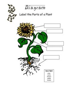 plant diagram worksheet