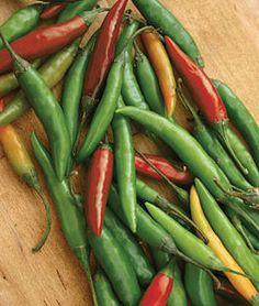 Pepper, Hot, Thai Hot,
