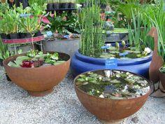 Vasi con piante acquatiche - Vasi decorativi