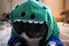 50 Dinosadorable Animals Dressed Up As Dinos