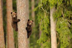 Bear with whelp