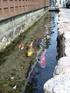 City+of+Swimming+Carp,+Shimabara+City Shimabara+Peninsula+(Unzen+City,+Shimabara+City,+Obama+Town+&+Minami-Shimabara+City) Old+buildings+and+streets