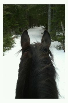 remembering riding horseback in the snow, winter 1986 Horse Girl Problems, Horses In Snow, Horse Ears, Colorado Winter, Pony Rides, Happy Trails, Friesian, Horse Photography, Horse Love