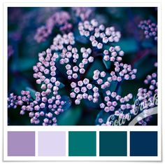 purple teal navy