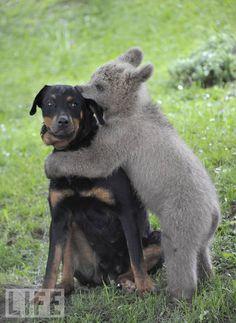 Bear Hug! ;)
