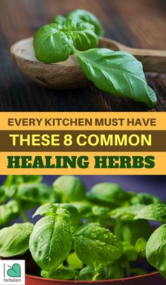 In this article, you will find 8 healing herbs that we must have in our kitchen and also learn the healing benefits from those herbs as well. Be Natural, Natural Herbs, Natural Healing, Natural Foods, Holistic Healing, Healing Herbs, Medicinal Herbs, Herbs For Health, Health And Wellness